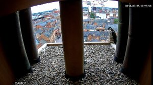 View from the right-hand nestbox camera